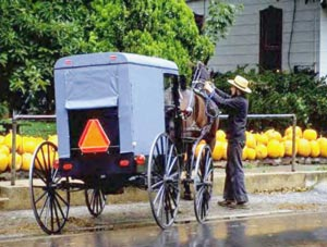 amish souvenir shop, shoo-fly pies